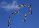 [组图]-2008法国贝尔克世界运动风筝锦标赛